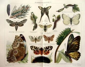 Vintage Lepidoptera  color lithograph print, 1896 antique butterflies engraving, insects entomology butterfly moths caterpillars plate.