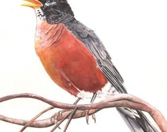 American Robin watercolor painting- print of watercolor painting, bird art, wall art, home decor