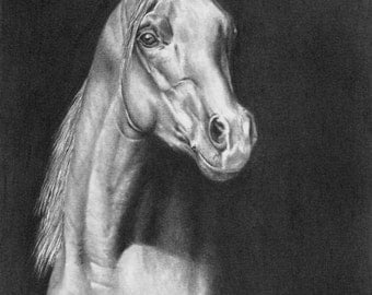 "Horse Art Print - 8""x10"" Art - Horse Art - Horse Drawing - Girls Room - Pencil Art Print - Home Essentials - Black and White - Home Decor"