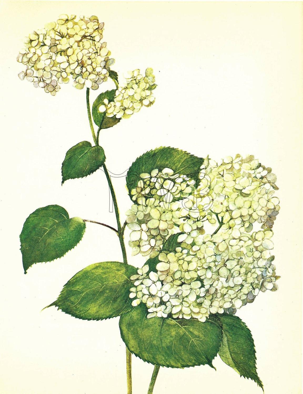 SALE Botanical Print, Plant Print, Flower Print, Art Print, Home ...