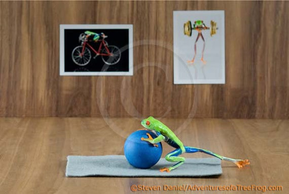Pilates, Yoga, REAL Frog Photo, Workout, Gym,  Workout Art Print