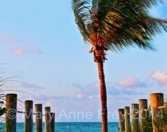 Tropical Paradise taken at Smathers Beach Key West, FL at Sunrise