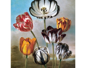 Tulips Fabric Block | Striped Tulip Flowers Repro from Vintage Image