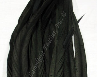 Rooster coque, black tail feathers, 14-16 inch, per 6 inches strung