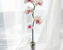 Orchid - Polymer Clay Flowers