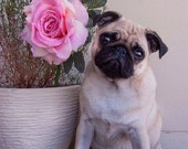 Cute Pug Photo // Dog Photography, Pink Rose Print, Cottage Chic Art, Pug Wall Art, Cute Home Decor, Fine Art Photography, Photo Gifts