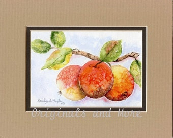 PRINT - APPLES MATTED;  8 x 10 inch,double matted, reproduction, nature, garden, art, watercolor,