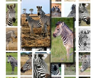 Zebra Wild African Animal Zoo Striped Digital Images Collage Sheet 1x2 inch Rectangles Domino Commercial INSTANT Download RD51