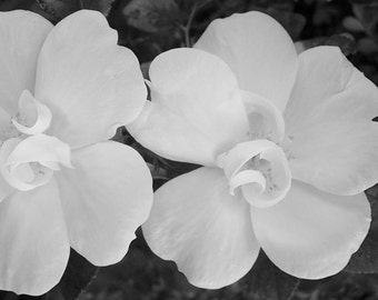 Black White Rose Photography, Flowers, Nature, Floral Photography, Wall Decor Fine Art