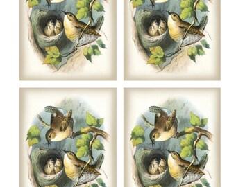 Vintage Pair WRENS feeding 5 CHICKS in NEST - Framed Image Sheet - Digital Instant Download - nature ephemera collage supply