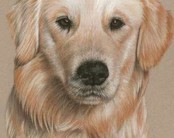 Golden Retriever Portrait - Fine Art Print