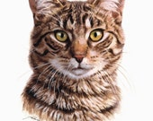 Fredek, the European cat; pet portrait, giclee limited edition hand signed by author, 9x7 or 14x10 inches
