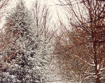 Landscape Photography, First December Snow, Home Decor, Wall Art, Nature Photography, Fine Art Photography, Winter Snow Photography, Snow