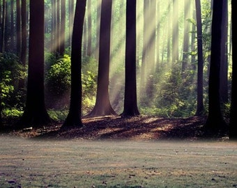 Forest Light Rays Photography Backdrop