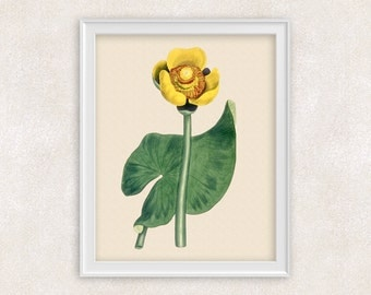 Yellow Water Lily Botanical Art Print - 8x10 PRINT Lotus Flower Print - Garden Prints - Illustration - Poster - Victorian Art - Item #154