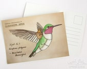 Hummingbird Postcard - Clockwork Bird steampunk illustration print