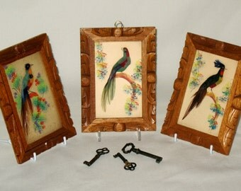 Feather Craft Birds 3 Framed Vintage Colorful Plumage and Paint Mexico
