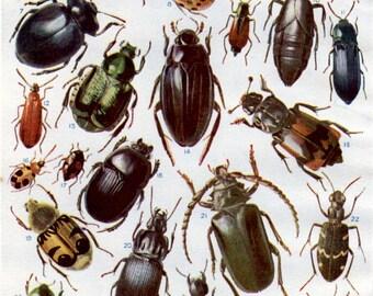 Lady Bird BEETLE and BUGS print, 1950s vintage beetles print, British Beetles, boy bedroom decor bugs