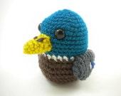 Cute Little Mallard Duck