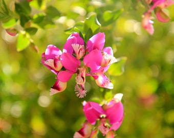 Tiny Fuchsia Flowers - Flower Garden Photo Print - Size 8x10, 5x7, or 4x6