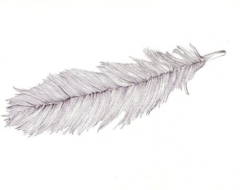 """Bird feather art print of an original drawing available 5x7"""" or 8x10"""""""