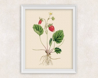 Strawberry Botanical Art Print - Fruit & Flower Print - Garden Prints - 8x10 PRINT - Illustration - Poster - Victorian Art - Item #164