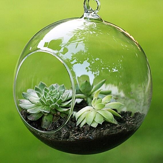 6cm hängende pflanzer luft pflanzen terrarium globe von holzhome