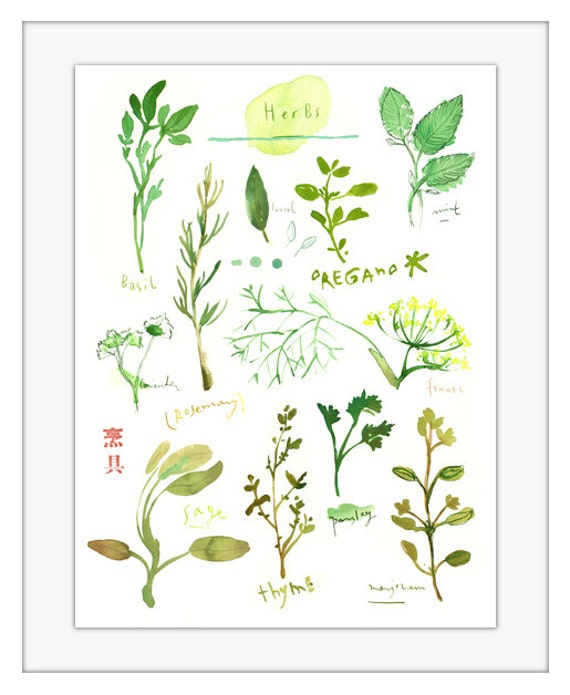 Herb print No 2 Watercolor herbs Herb poster Kitchen wall