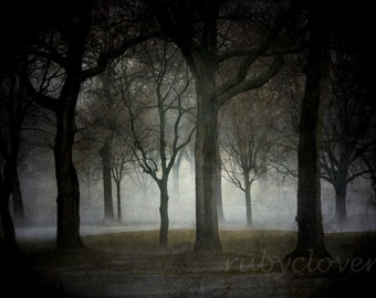 Dark Forest, Spooky Trees, Foggy Grove,Landscape Photo,Goth Decor,Nature Photography,Vampire Lover, Tree Hugger,Twilight Photo,Forest Poster