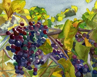 Grapevines wine red blue grapes original watercolor 7 x 8.5 Framed