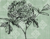 Digital Download Peony image Antique Illustration, digi stamp, digital stamp, Elegant, and beautiful flowers