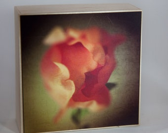 Red Green Rose Photograph on Wood--Soft Edges--4x4 Fine Art