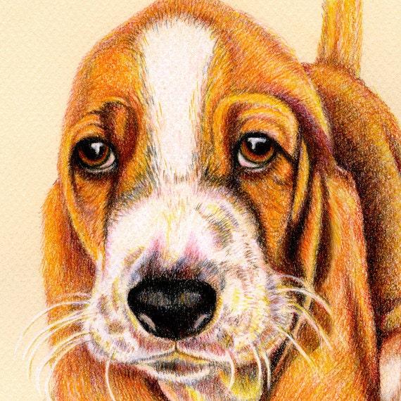 Original Pet Portraits. 8 x 10 inches in Colored Pencil