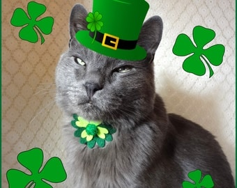 10 Cute St Patrick S Day Pet Outfits Shinga