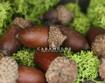 25 Natural Dried Acorns with Caps DIY Rustic