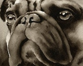 PUG Sepia Art Print Signed by Watercolor Artist DJ Rogers