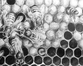 Honey Bee Hive 8x10 Inch Art Print - From Original Pencil Drawing Insect