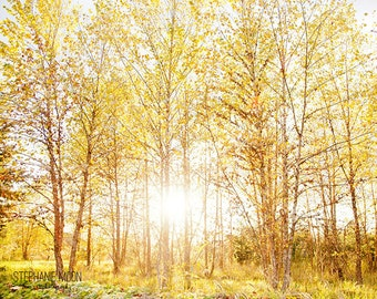 Nature Photography, Forrest Print, Autumn Trees Print,
