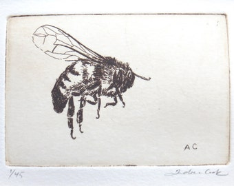 original etching of a bumble bee / honey bee