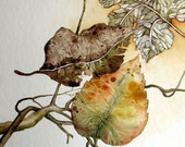Fall Leaves Collection - Original Painting - Nature Watercolor