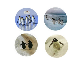 Penguin Magnets:  4 Charming Penguins - For your home, your collection,  or to give as a unique gift