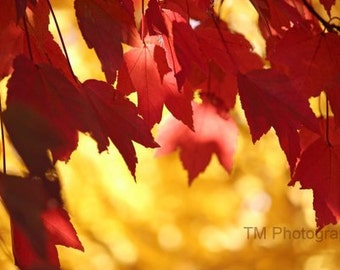 fall colors, nature photography, leaf photography, leaves in fall, fall colors photography, yellow, orange, nature photography, bright color