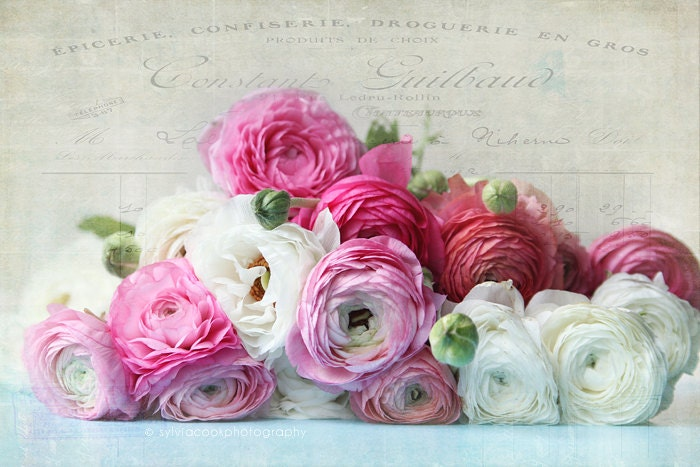 Ranunculus photoshabby chic home decor fine art print - Cuadros shabby chic ...