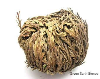 Jericho Flower, Rose of Jericho, Love, Pagan Wiccan, Magic, Power, Aromatherapy, Plants, Dried Flowers, Herbs, Roots, Magic,