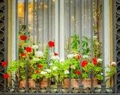 Paris Photography, Flower Box Photo, Flower Photograph France Print Window Planter Flowerbox Red Geraniums par24