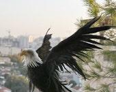 Needle Felted bird. American bald eagle. Made to custom order