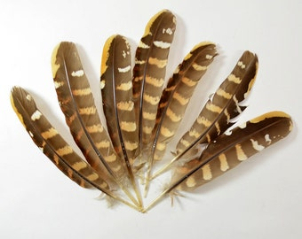 20 pcs - Pheasant Reeve Quills - Venery Pheasant Wing Feathers