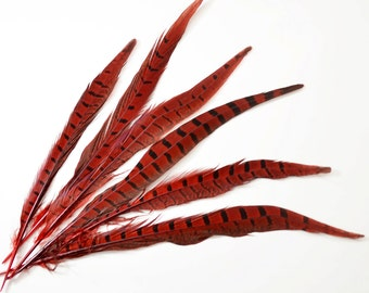 "Ringneck Pheasant Tail Feathers - Red, 10""-12"" (10pcs)"