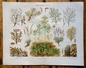 1894 desert plants & flowers original antique botanical flora print