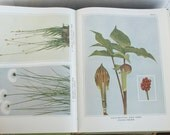 SHIPPING INCLUDED - Lovely Holiday Gift, Wild Flowers, Full Color Illustrations, Homer D. House, 1967 Reprint, Great Gift for Gardener